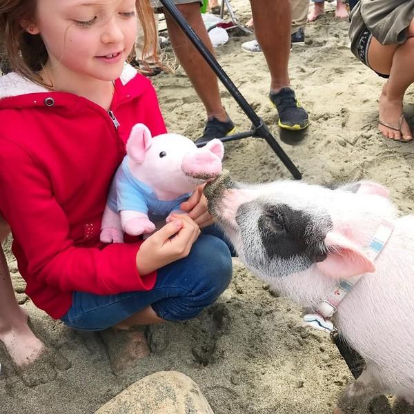 Selain itu, Pickles juga sering jadi hewan terapi untuk membawa kembali keceriaan untuk anak-anak ataupun di pantai jompo. Pickles memang menggemaskan. (Instagram/@livingwithpickles)