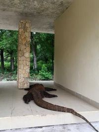 Media Australia: Pulau Komodo Adalah Jurassic Park yang Nyata
