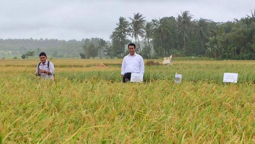 Kementan: Ini Bukti Petani Makin Sejahtera di Era Jokowi-JK