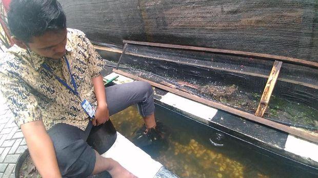 Surabaya Kini Punya Mini Agrowisata Main Ke Sana Yuk