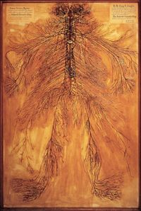 Penampakan lengkap seluruh saraf di tubuh manusia.