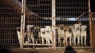 Fasilitasi Jualan Daging Anjing, Grab-Gojek-Shopee Disomasi