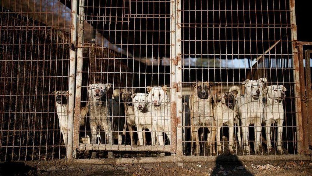 Sudah Dilarang, Resto di Korsel Masih Jual Daging Anjing Saat Olimpiade