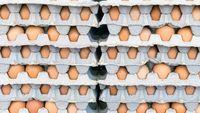 Gara-gara Salah Terjemahan, Chef Ini Kaget Dapat Kiriman 15.000 Telur