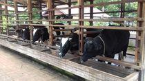 Habiskan Akhir Pekan di Bogor, Coba Main ke Kuntum Farmfield