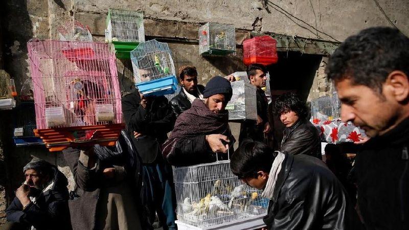 Pasar burung Kabul tak hanya sekedar tempat untuk berjualan burung. Pasar di gang-gang sempit ini jadi tempat favorit pria Afghanistan melepas stress. (Mohammad Ismail/Reuters)
