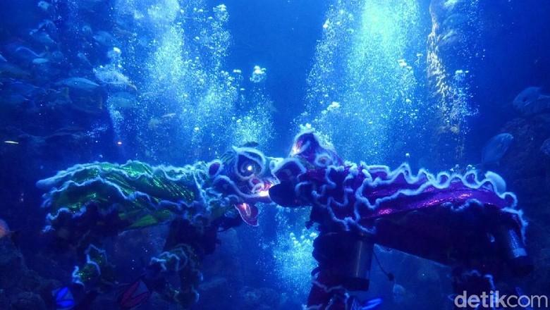 Foto: Underwater barongsai di Seaworld (Kurnia/detikTravel)