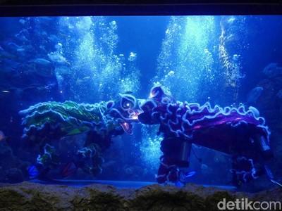 Libur Imlek di Seaworld, Ada Barongsai Beraksi di Dunia Bawah Laut