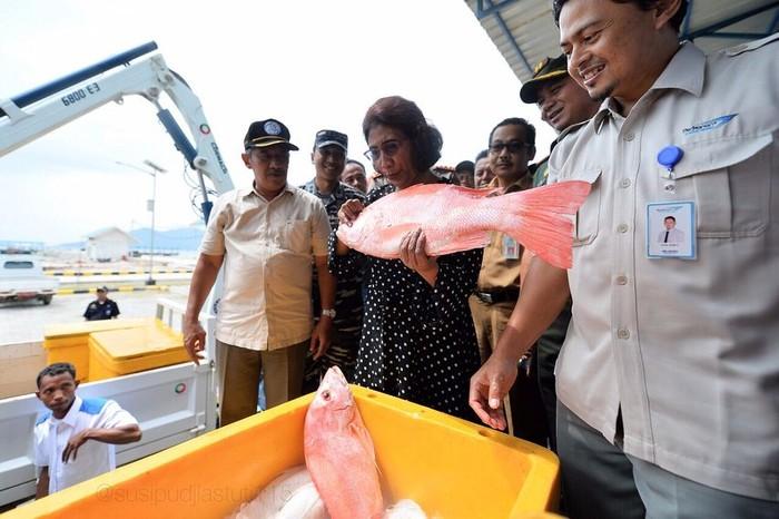 Akhir Januari lalu, Ibu Susi berkunjung ke Sentra Kelautan dan Perikanan Terpadu (SKPT) di Natuna. Ia memegang ikan kakap merah segar berukuran lumayan besar. Foto: Instagram dan Twitter Susi Pudjiastuti