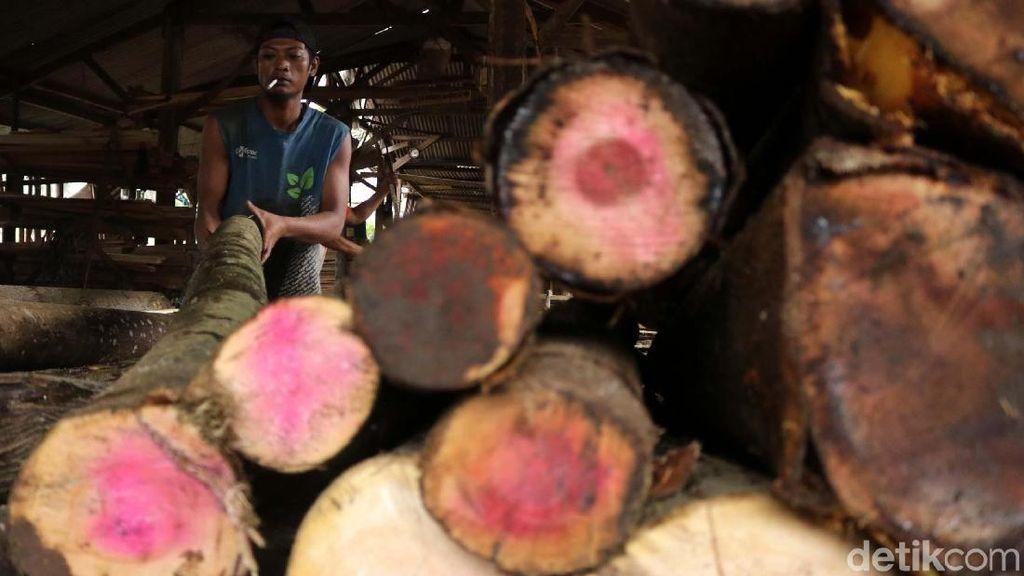 Selain Pohon Sengon, Ada Jati hingga Mahoni yang Bisa Buat Bisnis
