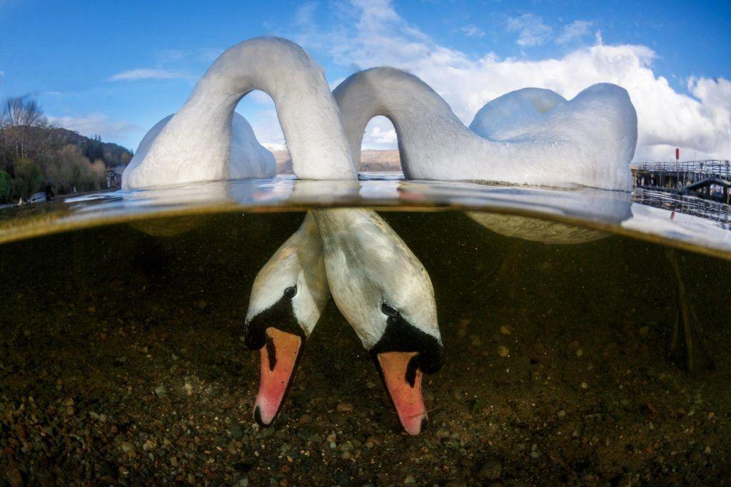 British Underwater Photography of The Year diraih Grant Thomas dari Inggris. Foto ini juga sekaligus jadi pemenang British Waters Wide Angle. Foto: Underwater Photography of The Year