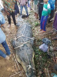 BKSDA Aceh: Buaya yang Ditangkap di Aceh Timur Bobotnya 600 Kg