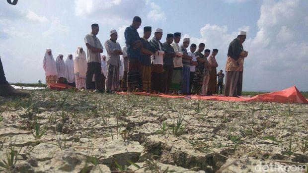 Rekahan tanah di areal persawahan di Kecamatan Pirak Timu, Aceh Utara