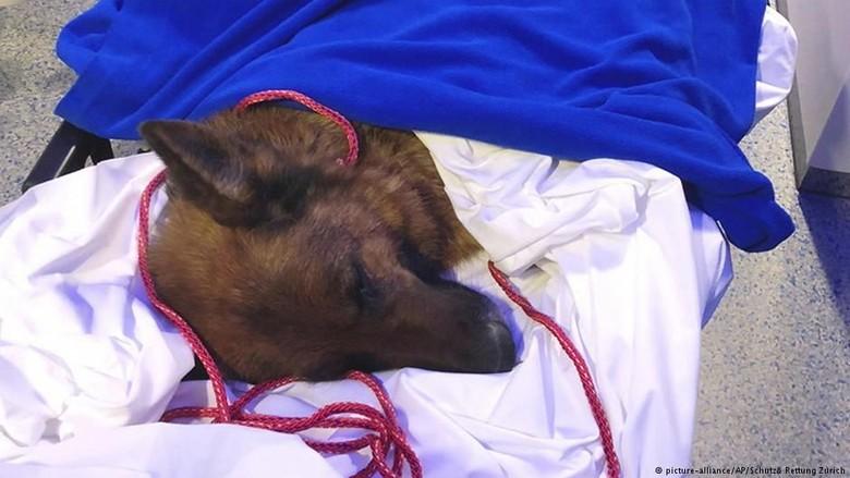 Hilang Berbulan-bulan, Anjing Ini Ditemukan Ratusan Km dari Rumahnya