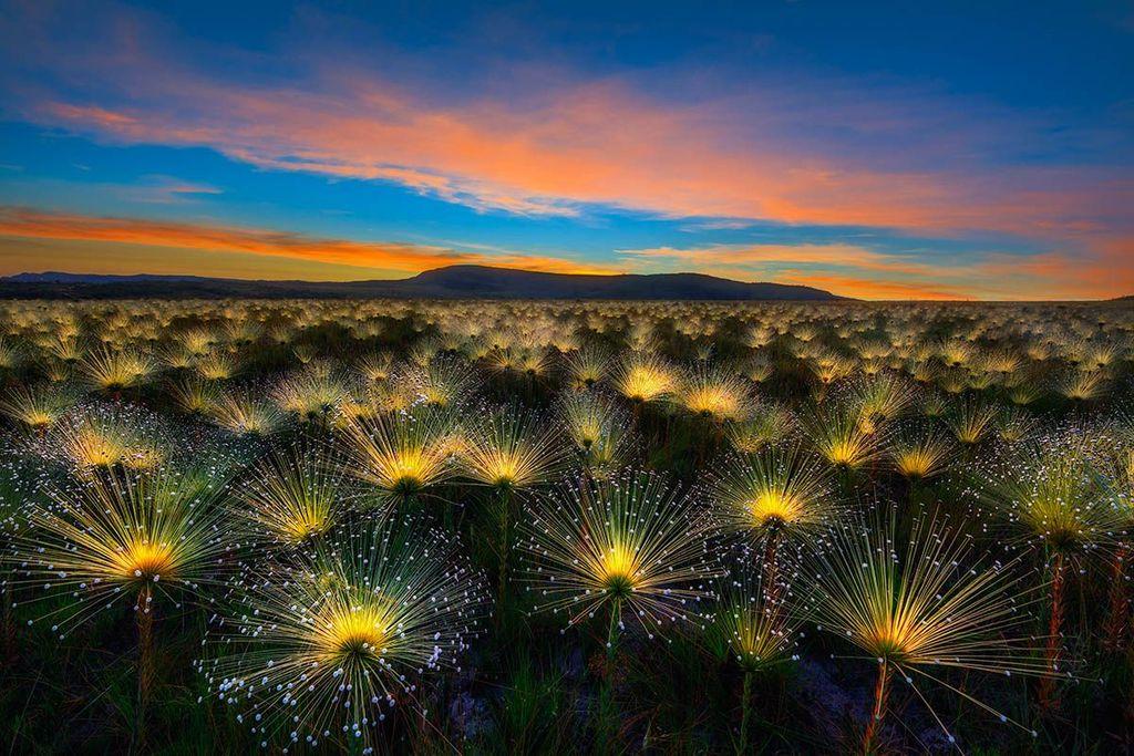 Pemenang utama dan kategori wildflower landscape - Marcio Cabral. Foto: igpoty.com