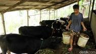 Kementan Minta Industri Susu Bantu Peternak Lokal Naik Kelas