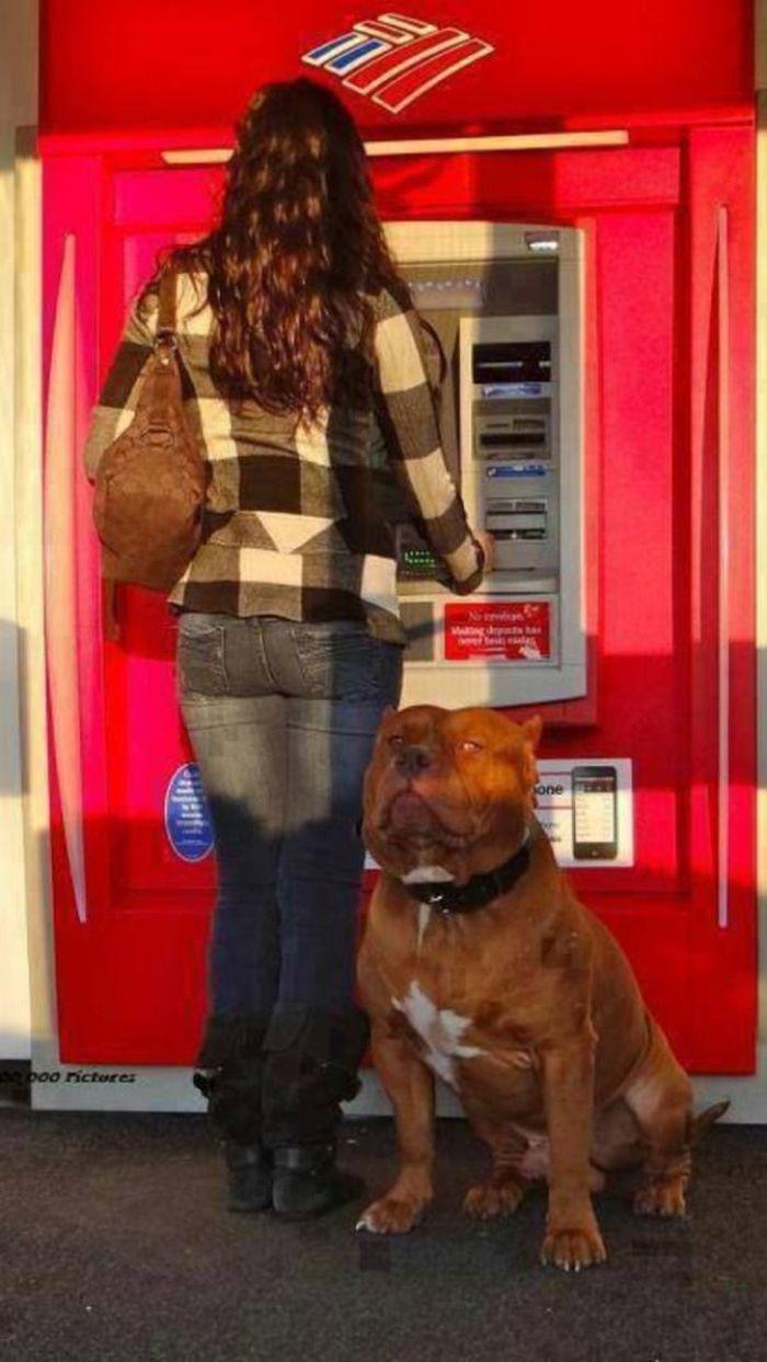 Tidak ada satpam di sekitar? Tak perlu takut, bawa anjing piaraan Anda ke mesin ATM. Istimewa/Berodpanda