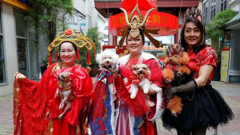 Anjing-anjing Lucu Bersolek Jelang Imlek di Filipina