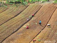 Mama-mama di Ugimba sedang berkebun
