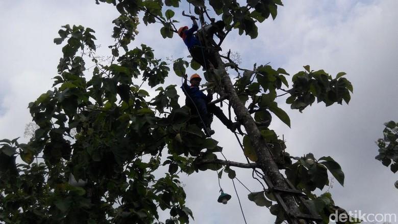 Hendak Tebang Pohon, Tukang Kebun Tewas Tersengat Listrik
