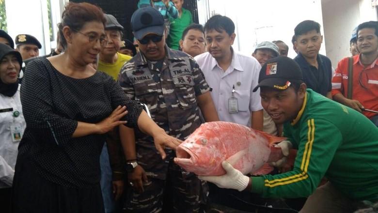 Menteri Susi Puas Hasil Ikan di Probolinggo, Sehari 300 Ton
