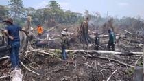 Polisi Periksa 3 Saksi Terkait 30 Hektare Hutan di Aceh Jaya Terbakar