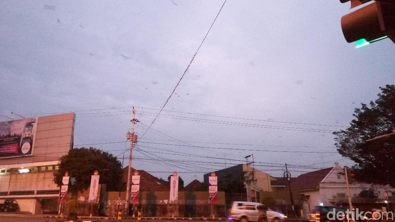 Saat Ribuan Burung Menghiasi Malam Jalanan Kota Solo