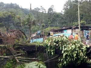 Diterjang Angin Kencang, Pohon Besar di Pacet Tumbang