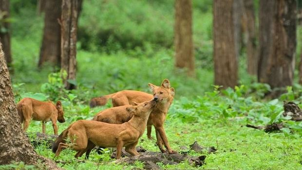Beberapa satwa di taman nasionalnya