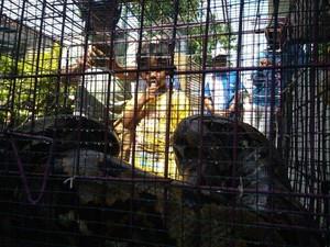 Ular Sanca yang Ditangkap Warga Probolinggo Kerap Mangsa Ternak