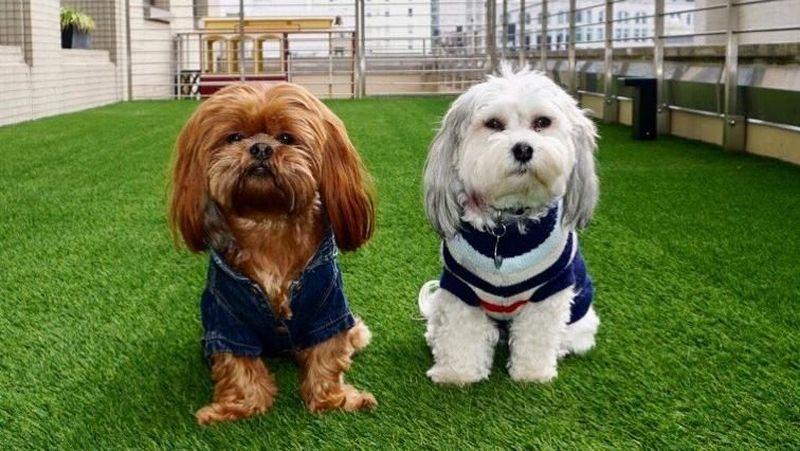 Buster Punya B K Teman Sesama Anjing Selebgram Ini Saat Dia Foto Bareng Dengan Anjing Louis