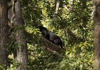 Mau Masuk ke Hutan Ketemu Black Panther?