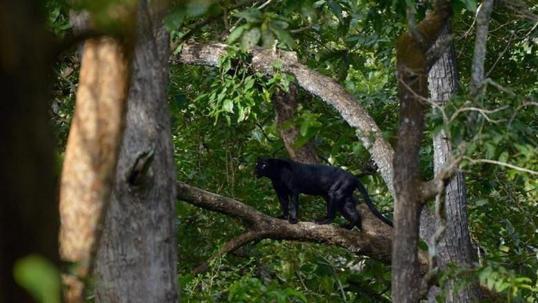 Foto: (Wildlife Trails)