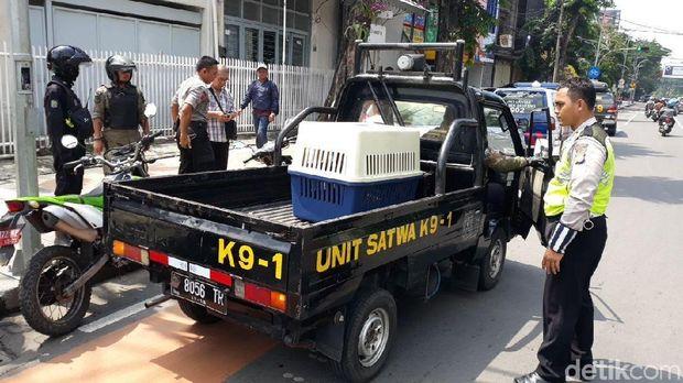 Anjing diamankan Unit Satwa (Tim K9) Polrestabes Surabaya