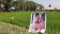 Kocak! Petani Ini Pasang Poster Artis Porno Agar Hasil Panennya Bagus