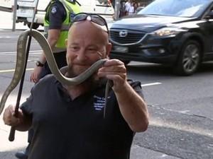 Ular Berbisa Ditemukan di Jalanan Pusat Kota Melbourne