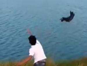 Video: Ketika Anjing Dilempar ke Sungai untuk Jadi Makanan Buaya