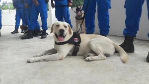 Pongki dan Tina, Anjing Pelacak dari Belanda yang Jitu Endus Narkoba