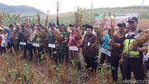 Panen Kedelai Perdana, Perhutani Banyuwangi Selatan Hasilkan 690 Ton