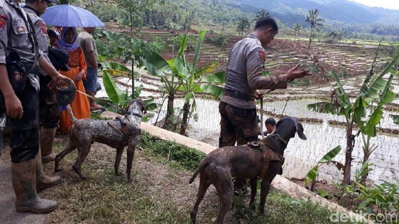 13 Orang Hilang, Anjing Pelacak Diterjunkan di Lokasi Longsor Brebes