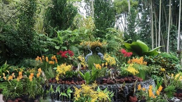 Orchid Garden merupakan taman yang punya beribu macam jenis anggrek. Untuk masuk ke sini kamu akan dikenakan biaya SGD 5 atau sekitar Rp 50.000 per orang (Bonauli/detikTravel)