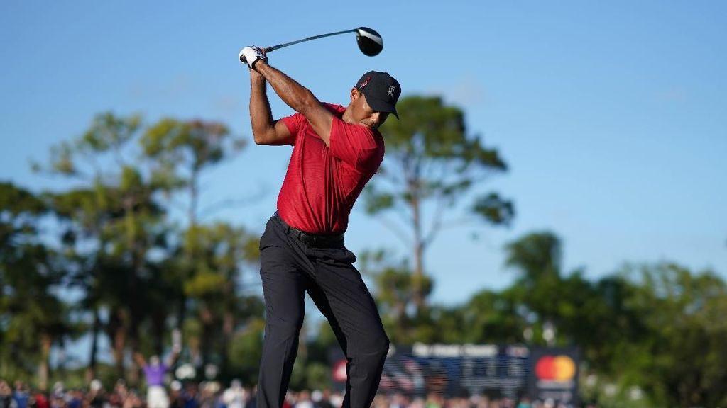 Kasihan, Bebek Ini Kena Bola Golf Pukulan Tiger Woods