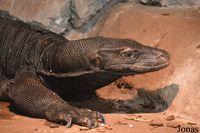 Tanggapan Taman Nasional Komodo Soal Video 9GAG yang Heboh