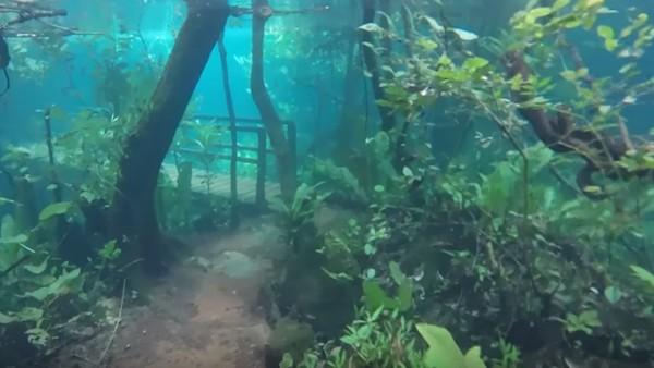 Foto: Aliran sungai Olho DAgua yang berada di di sebelah jalur hiking pun meluap. Kalau biasanya turis hanya bisa berenang di Sungai Olho DAgua, banjir ini membuat penjaga hutan bisa berenang di kawasan hutan. (Recanto Ecologico Rio da Prata/Youtube)
