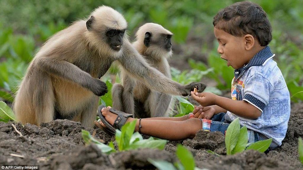 Akrab dengan Kawanan Monyet, Bocah 2 Tahun Ini Dijuluki Mowgli