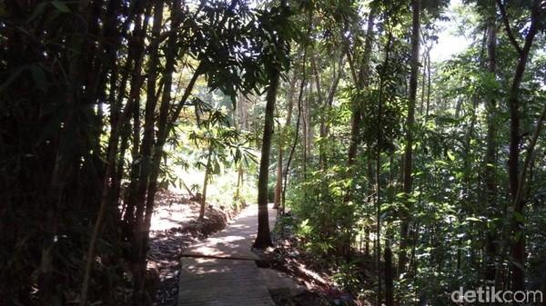 Untuk menuju ke air terjun, traveler mesti melewati hutan pohon bambu, sengon dan juga pohon lainnya. Pemandangannya hijau dan menyejukkan. (Eko Susanto/detikTravel)