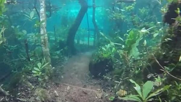 Foto: Banjir ini diketahui oleh penjaga hutan yang sedang berkeliling. Melihat banjir yang terjadi, bukannya panik ia justru snorkeling dan merekam kejadian ini. (Recanto Ecologico Rio da Prata/Youtube)