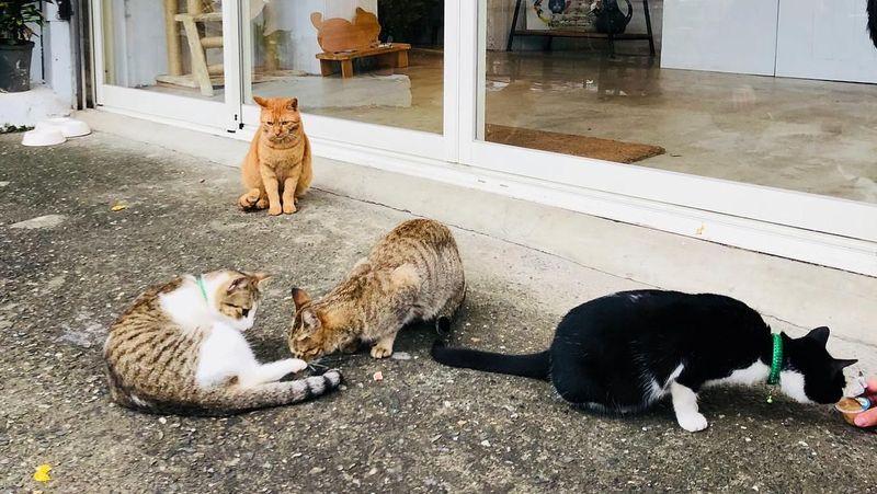 Houtong merupakan desa di Distrik Ruifang, New Taipei, Taiwan. Houtong terkenal dengan populasi kucingnya yang cukup besar (pink_skyblue/Instagram)
