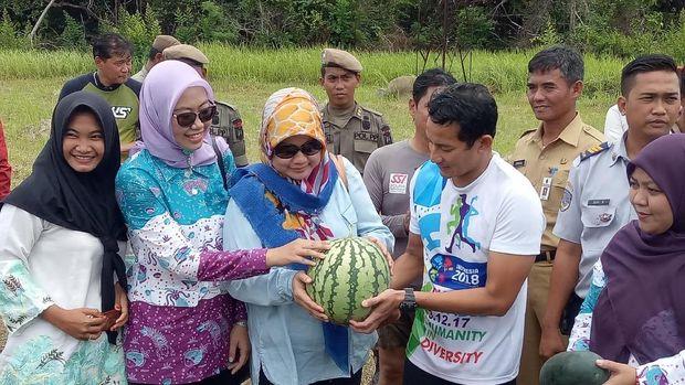 Sandiaga juga memanen semangka.