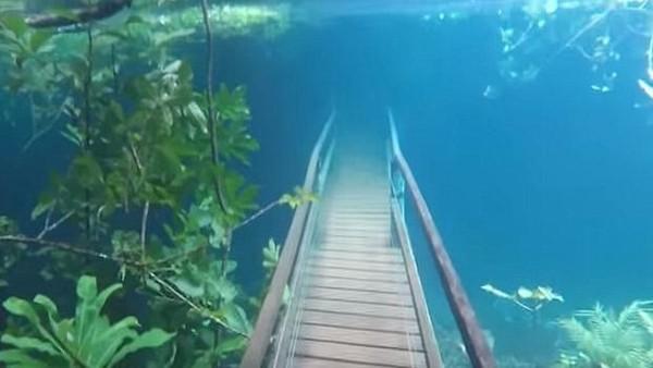 Foto: Ia berenang ke jalur hiking dengan tenang. Terlihat bahwa banjir malah membuat jembatan dan pepohonan di sekitar daerah tersebut makin cantik. Air banjir menjadi jernih karena sungai juga membelah kawasan karst. (Recanto Ecologico Rio da Prata/Youtube)